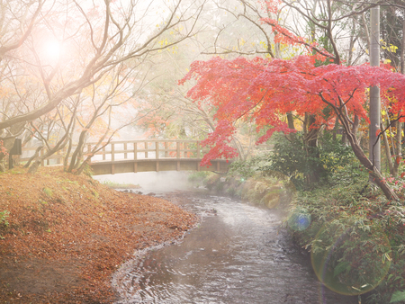 57270411 - soft and blur autumn background in japan